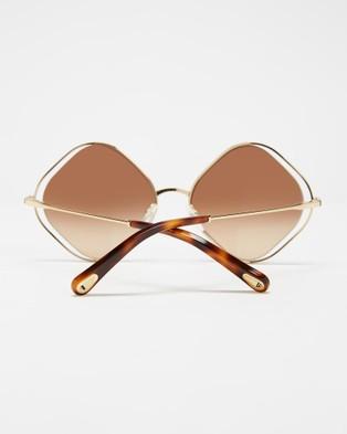Chlo?? CE159S - Sunglasses (Havana & Brown)
